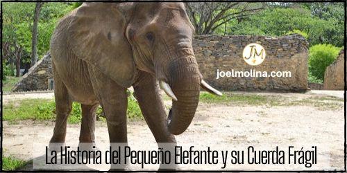La Historia del Pequeño Elefante y su Cuerda Frágil